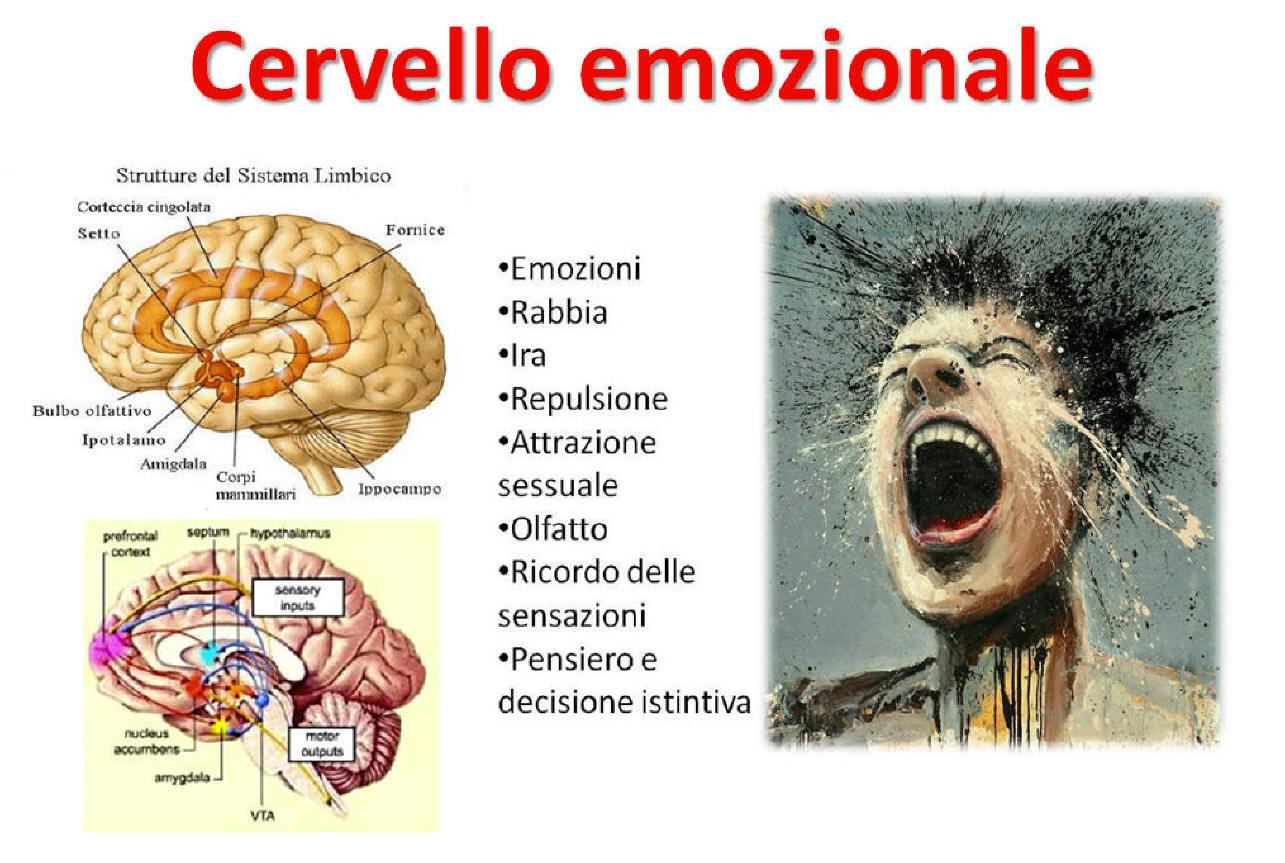 Il sistema limbico, circuito delle emozioni e del piacere o repulsione