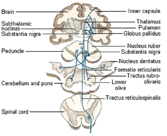 a hypokinesias ed b hyperkinesis